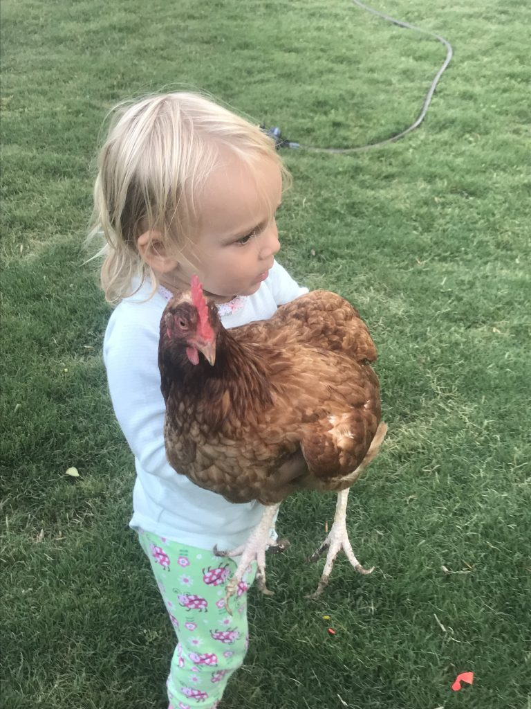 One and a half year old holding an old hen.